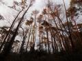 夕陽の赤松林