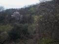 山の桜も見頃になってきました
