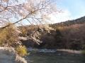 桜と青葉山