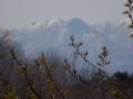 雪山と若葉