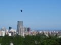 鳶の飛ぶ青空