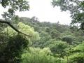 中島池の辺り