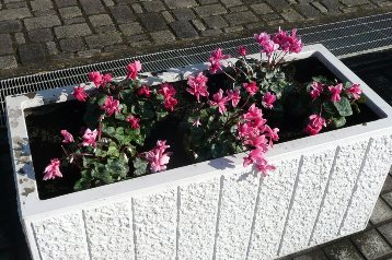交通園花壇 (3)