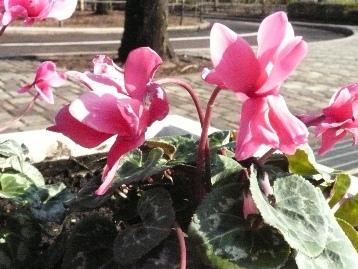 交通園花壇 (4)
