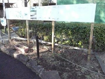 オオムラサキ観察園前花壇 (1)