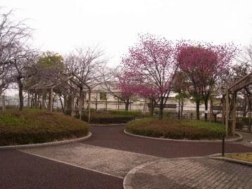 20150319カンヒザクラ(交通園) (1)