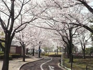20150330ソメイヨシノ(交通園)