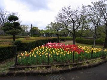 20150411アスレチック広場前花壇 (3)