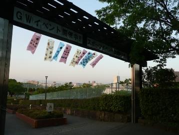 150502鯉のぼり(1Ⅱ期中門) (10)