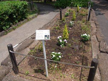 150602花壇植え替え (4)