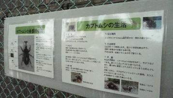 150620昆虫観察園 (1)