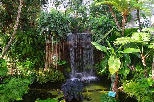 夢の島熱帯植物園 001