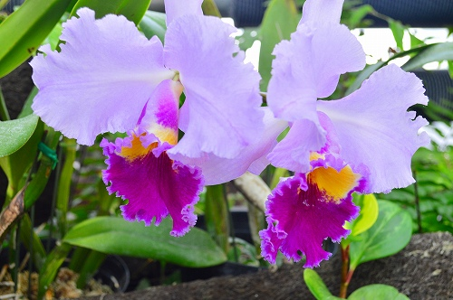 夢の島熱帯植物園 003