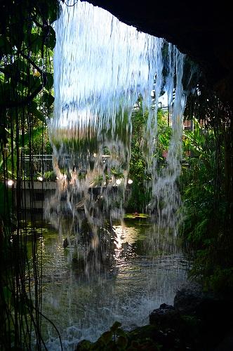 夢の島熱帯植物園 005