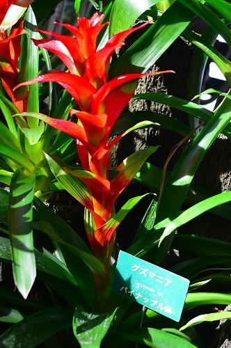 夢の島熱帯植物園 006