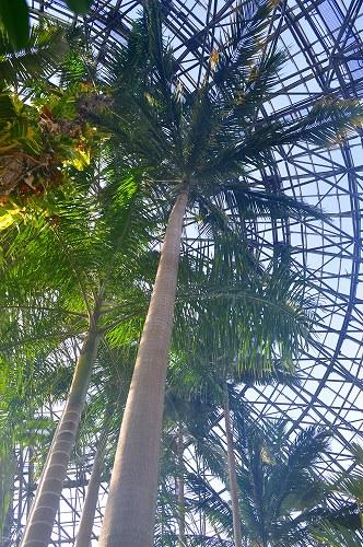 夢の島熱帯植物園 009
