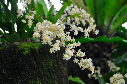 夢の島熱帯植物園 030
