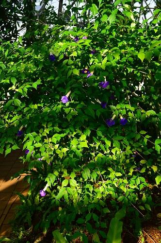 夢の島熱帯植物園 022