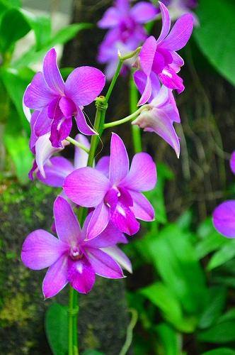 夢の島熱帯植物園 026
