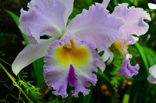 夢の島熱帯植物園 032
