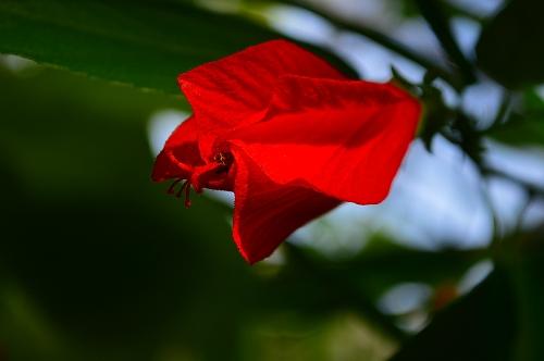 夢の島熱帯植物園 035
