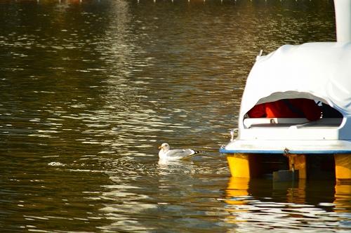 不忍の池の住人達 071