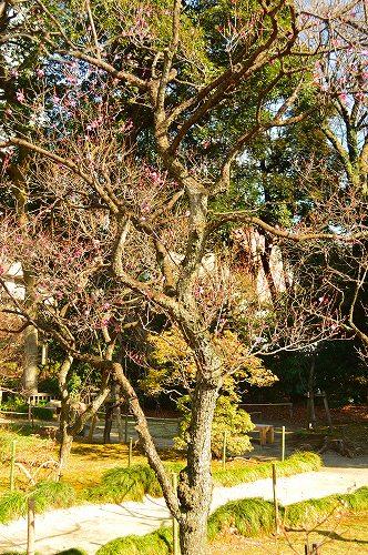 小石川後楽園 038