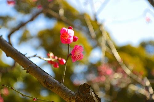 小石川後楽園 040