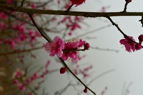 湯河原梅林 018