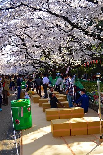 上野の桜0005