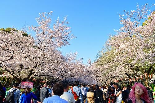 上野の桜0010