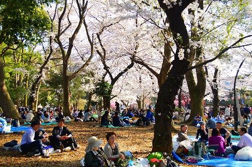 上野の桜0017
