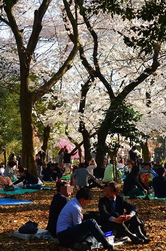 上野の桜0018