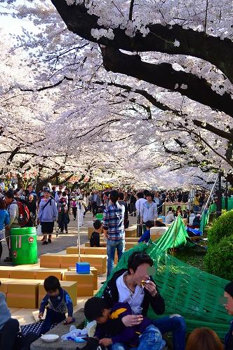 上野の桜_0004