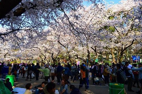 上野の桜_0008