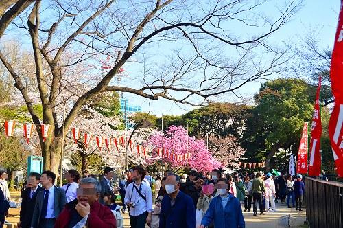 上野の桜_0014