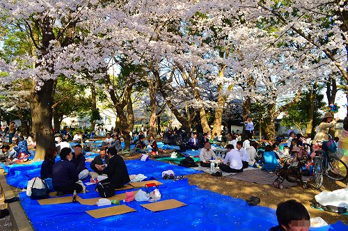上野の桜_0016