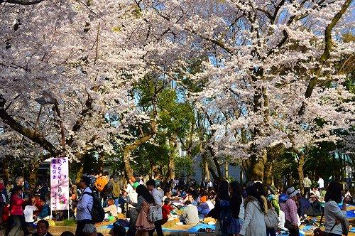 上野の桜_0013