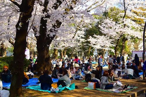 上野の桜_0012