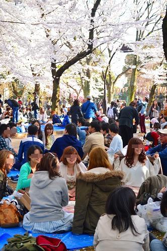 上野の桜0019