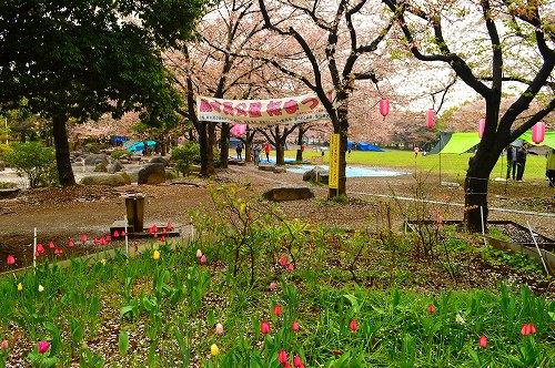 桜吹雪002