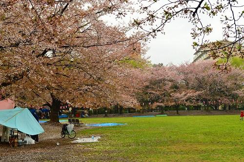 桜吹雪016