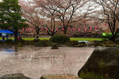 桜吹雪023