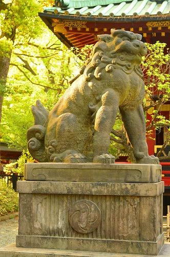 根津神社DSC_0062