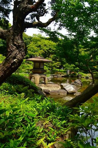 古河庭園0054
