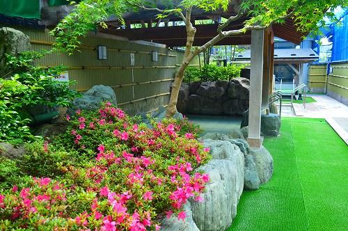浅野川DSC_0353