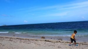 フク木並木の海