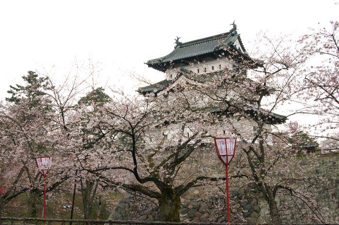 弘前城さくら1