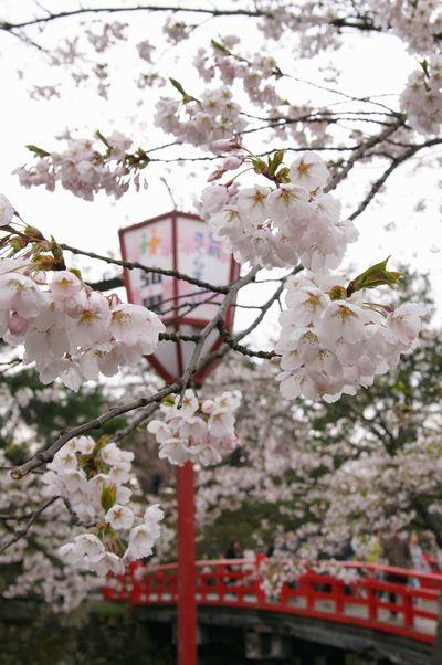 弘前城さくら7_00117