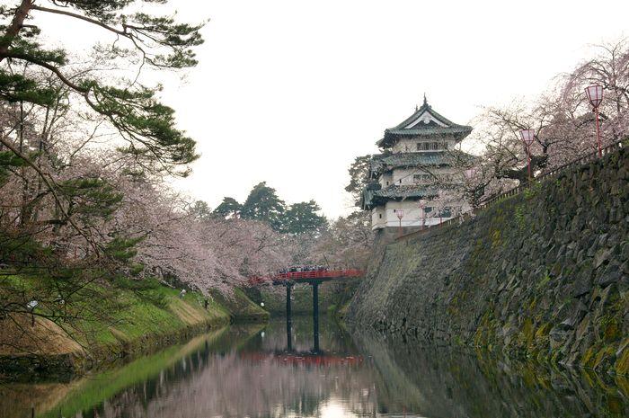 弘前城さくら8